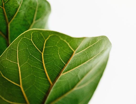 Radiance Plant Hire